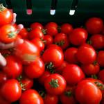 Врач рассказал о вреде помидоров для здоровья