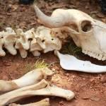 Ничего живого. Ученые зафиксировали начало нового массового вымирания