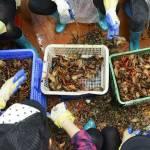 Как Китай воевал с коронавирусом на Уханьском рынке морепродуктов