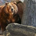 Какие животные в России самые опасные