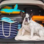 Как правильно размещать вещи в багажнике?